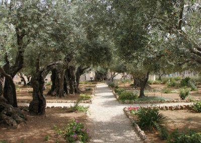 Garden of Gethsemane – Jerusalem
